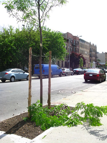 Torn Park Pl, btw Classon & Franklin Av 6/1 (1)