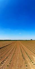 Azure Blue (bogenfreund) Tags: sommer feld horizont symmetrie linien tiefe