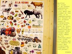 Quitter la ville .... (Savage French Grey-Blues) Tags: fleurs domination champs liberté animaux campagne ville jonquilles sages prés idées imbéciles tranquilles regarderlaviepasser