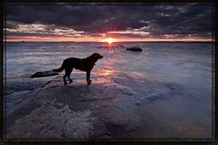 Tika on Rock-Cranberry Trail (CUCKOOPHOTHOG) Tags: camera sunset pets ontario canada lens landscape rocks photographer country lakes places 03 09 beaches filters hitech province tika northbay lakenipissing gnd hardedge cranberrytrail nikond300 tokinaatx116 ruiferreira hoyalpfpolarizercir