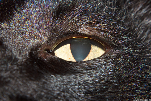 black cat eye looking at you 1485