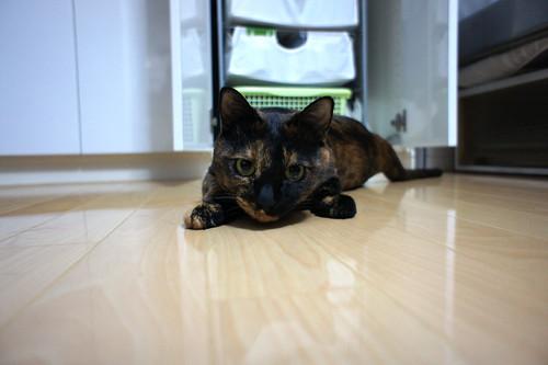 NEX-5 TEST CAT