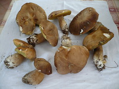 i funghi porcini mangiati per cena