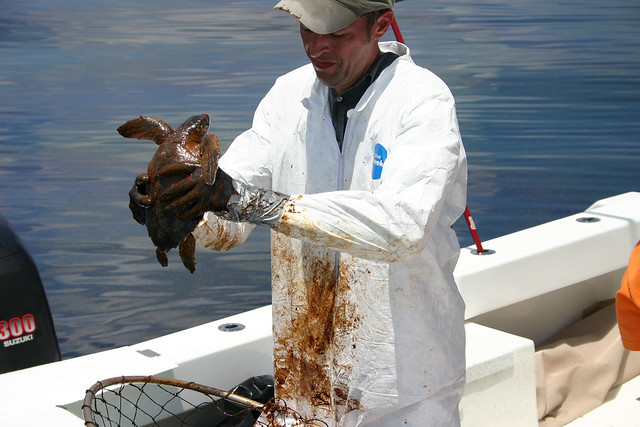Oiled Turtle Rescue and Rehabilitation