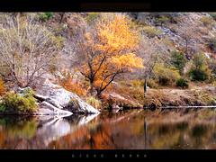 Arbol Dorado / Golden Tree (DiEgo bErrA) Tags: arbol lago reflejo otoo bestofmywinners