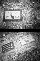 A cat named Spanky, a turtle named Speedy and a monkey named Lisa (QsySue) Tags: flowers blackandwhite pets grave graveyard animals cat monkey diptych turtle headstone lisa graves 35mmfilm gravestone orangecounty speedy huntingtonbeach spanky efke25 developedathome halfframecamera konicarecorder konicaaa35 seabreezepetcemetery