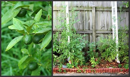 More Garden 6.17.2010