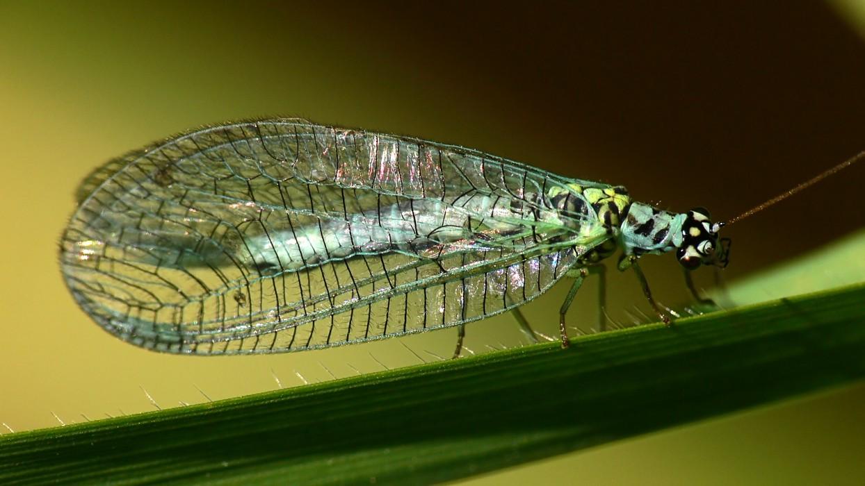 Bộ sưu tập côn trùng 2 - Page 24 4712207377_b512bc12f1_o
