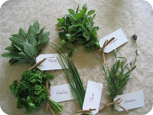 herbs bunched and labeled