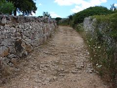 Antico tratturo (scaurel) Tags: valle secco locorotondo muretto ditria
