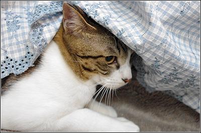 猫、ねこ、ネコ、、というかキッド