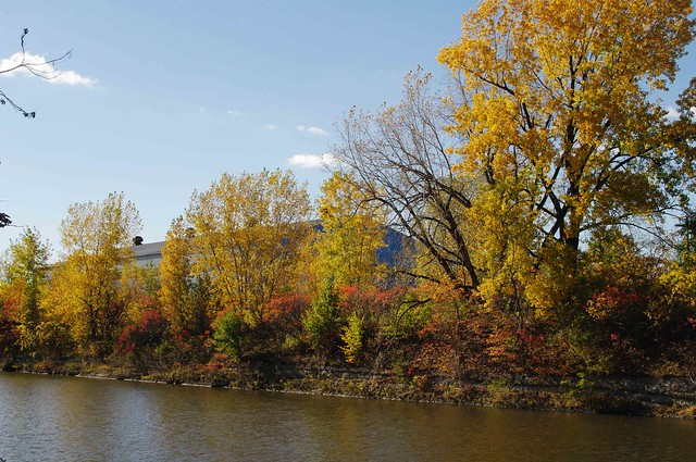 Fall Colors in lachine