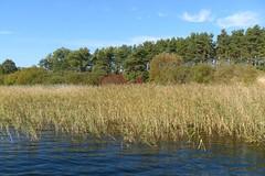 Feisneck (ThomasKohler) Tags: autumn lake fall germany deutschland see herbst feisneck seenplatte warenmritz mritzsee mueritzsee warenmueritz feisnecksee