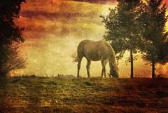 Horse on a hill (harryja) Tags: 1001nights platinumphoto magicunicornverybest magicunicornmasterpiece 1001nightsmagiccity mygearandmepremium mygearandmebronze mygearandmesilver mygearandmegold thelittlebookoftreasures mygearandmeplatinum mygearandmediamond