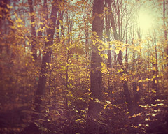 How to be lost (IrenaS) Tags: autumn trees sun fall nature leaves backlight forest landscape woods glow branches wwwirenesuchockicom