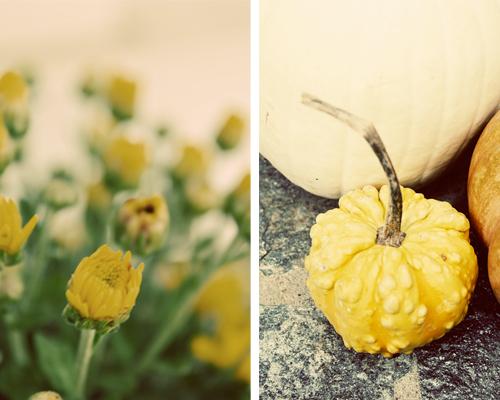 yellow mums, gourd