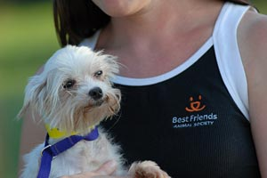 Little dog who is now free from the horrors of a puppy mill thanks to Pup My Ride rescue
