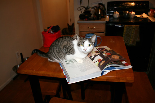 Emmaline, a grey tabby cat with much white on her tummy and a mostly white face, crouches on a Jamie Oliver cookbook that is open to Awesome Apple Pancakes.  She has a look of disapproving concern on her face.