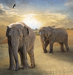 Walk of elephants (daydreamdph) Tags: art contemporary elephants society greatphotographers contemporaryartsociety platinumheartaward platinumpeaceaward bestcapturesaoi magicunicornverybest magicunicornmasterpiece tripleniceshot elitegalleryaoi mygearandmepremium mygearandmebronze mygearandmesilver mygearandmegold mygearandmeplatinum mygearandmediamond abokehoflight ringexcellence greaterphotographers sunofgodphotographer dblringexcellence greatestphotographers tplringexcellence ultimatephotographers pipexcellence lostcontperdidos aboveandbeyondlevel4 aboveandbeyondlevel1 flickrstruereflection1 flickrstruereflection2 flickrstruereflection3 flickrstruereflection4 masterclasselite aboveandbeyondlevel2 aboveandbeyondlevel3