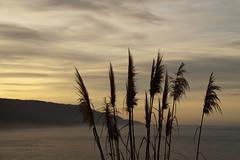 Big Sur Lan
