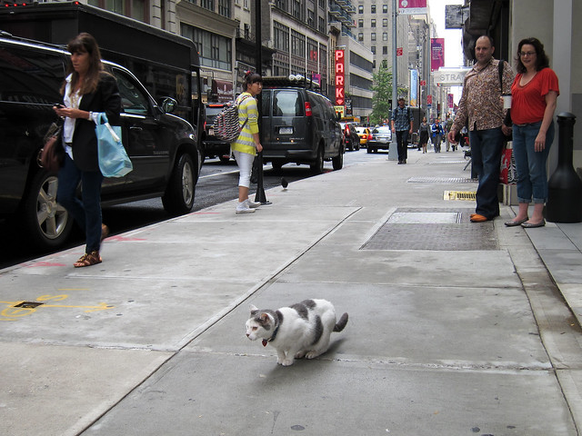 New York Kitty