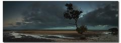 """The Tree"" - Wellington Point (danishpm) Tags: seascape sunrise canon panoramas australia wideangle brisbane queensland aussie aus 1020mm wellingtonpoint sigmalens eos450d 450d sorenmartensen hitechgradfilters 09ndreversegradfilter"
