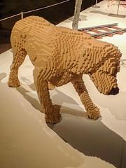 Dog by Lego artist Nathan Sawaya (mharrsch) Tags: dog canine lego sculpture art nathansawaya artofthebrick exhibit omsi oregonmuseumscienceandindustry oregon mharrsch