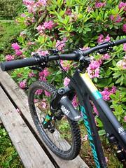 Rhododendron Park 4 (pjen) Tags: santacruz mtb finland nature forest carbon lake fullsuspension nordic freedom boreal maastopyörä pike 275 650b kashima trail bicycle bike 2x11 outdoor vehicle 5010 5010cc 50to01 flowers rhododendron park summer