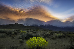 Bishop (3dRabbit) Tags: eastern sierra bishop flower clouds sunset mountain sungjinahn canon wideangle nature outdoor peace magic