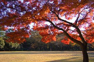 秋の砧公園