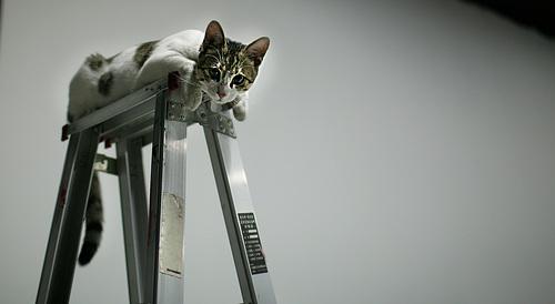猫:给个镜头么