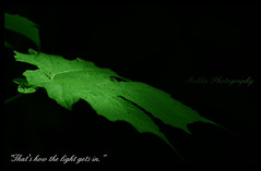 That's how the light gets in. (Karthick Makka) Tags: light india leaf pentax chennai hilltop tamilnadu banglore nandihills karthick k200d makkaphotography