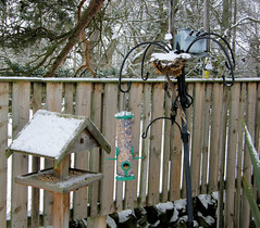 Feeders in the Snow