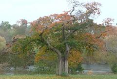 tree (Lady fifiabdul) Tags: november09