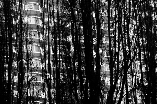 Trees & Apartment Block 02 BW