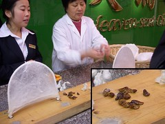 Silkworms and cocoons
