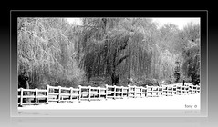 Hampstead Heath (The Stig 2009) Tags: white snow black london fence o snowy sony tony willow hampstead 2009 weeping willows dsc stig 2010 thestig tx1 instantfav tonyo thestig2009