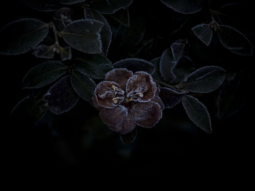 frosted in the dark