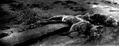 S_Analogik_TRASH_4 (marcosomma1979) Tags: 28mm miranda ilford fp4 ee canonscan 8800f blackwhitephotos