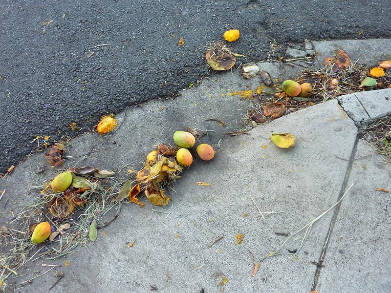 Mango, squashed, 183/365