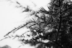 a neopan winter (Mathias*) Tags: nikonn90s fujineopan1600