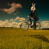 White Rabbit (Mr Bultitude) Tags: white rabbit field bicycle flying surreal racing suit cycle reality alternative dreamcatcher whiterabbit jeffersonairplane pyschedelia graphicmaster