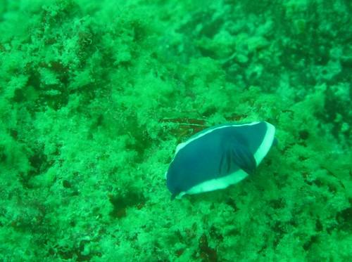 2010-01-03 Dive #9 - Seaventure 040