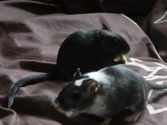 Suri and Petra