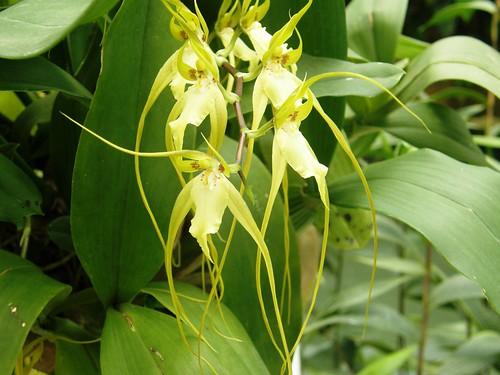 orquidea 34