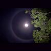 ~wolf moon~ (uteart) Tags: moon mexico ring fullmoon handheld moonring wolfmoon utehagen uteart theauthorsplaza 29jan2010