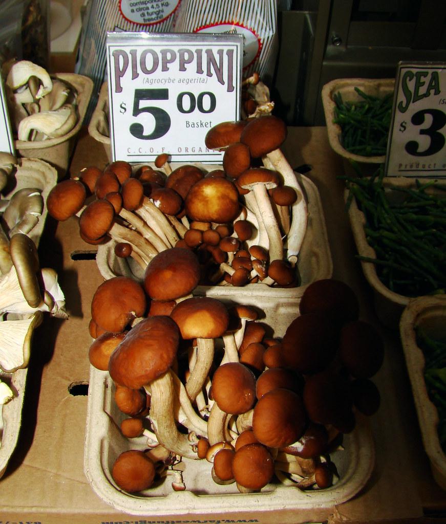 DSC03144 Pioppini (Agrocybe aegerita)