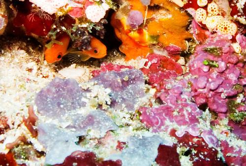 Bunaken Underwater 12