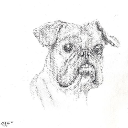 French Bulldog 01