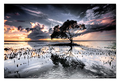 The Lovely Bones ([ Kane ]) Tags: morning sky sun tree beach water glass clouds sunrise matt dawn sand roots australia brisbane mel mangrove qld queensland ripples kane gledhill p121 sigma1020 50d thelovelybones riples beachmere cokingrad great123 kanegledhill kanegledhillphotography